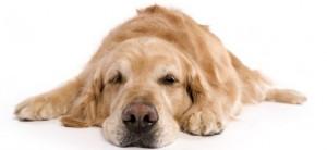 Har du fundet knude på kæledyr